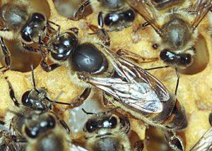 Čebele in čebelarska oprema